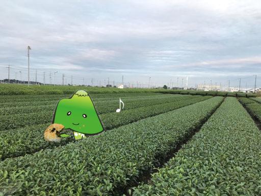 茶畑のあさまくん